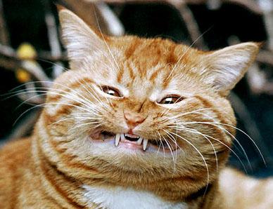cats_smile.jpg