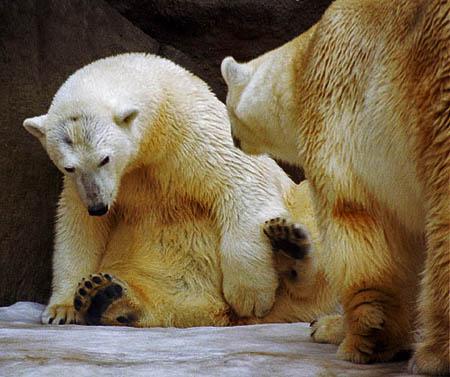 w_bear1.jpg