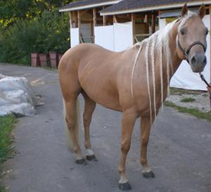 quarterhorse-italy-3.jpg