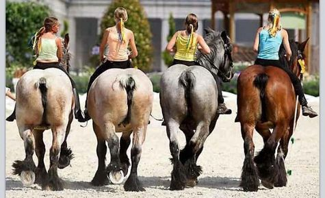 596500b8bed89601447f25542318aee3-big-butts-big-horses.jpg